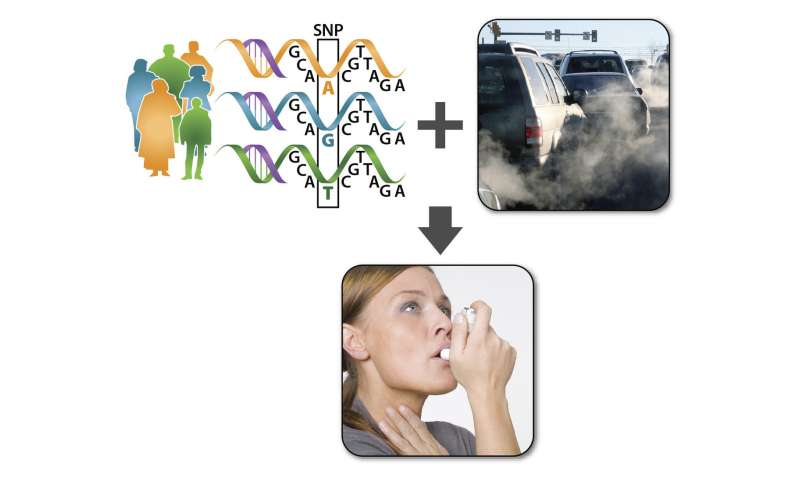 Genetics and pollution drive severity of asthma symptoms