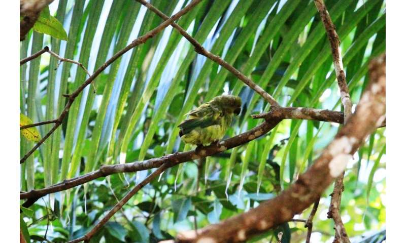 Global trade in exotic pets threatens endangered parrots through the spread of a virus
