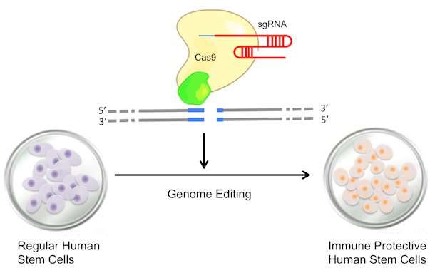 Grant to explore genome editing and stem cell potential for cardiac treatment