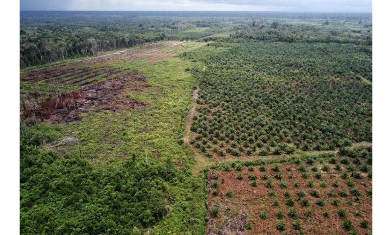 Green groups have long accused palm oil companies of rampant environmental destruction in Indonesia