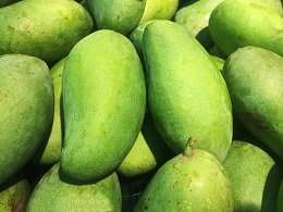 Green mango peel—a slick solution for oil contaminated soils