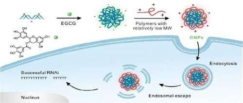Green tea compound helps siRNA slip inside cells