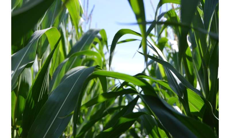 Growing more food with less fertiliser
