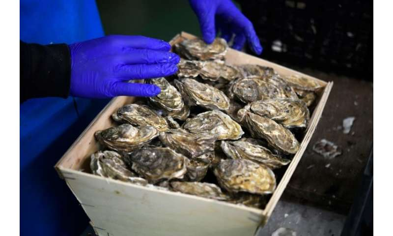 Gulping down oysters has long been a favourite New Year's Eve ritual for the French