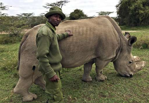 Health of world's last male northern white rhino in decline