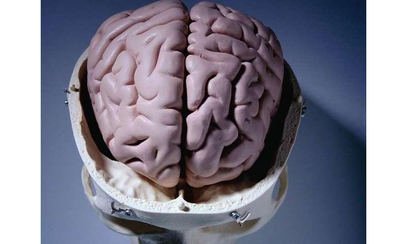 Hep C compounds alcoholism's effect on brain volume