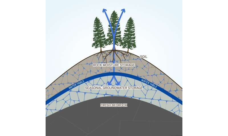 Hidden 'rock moisture' could be key to understanding forest response to drought