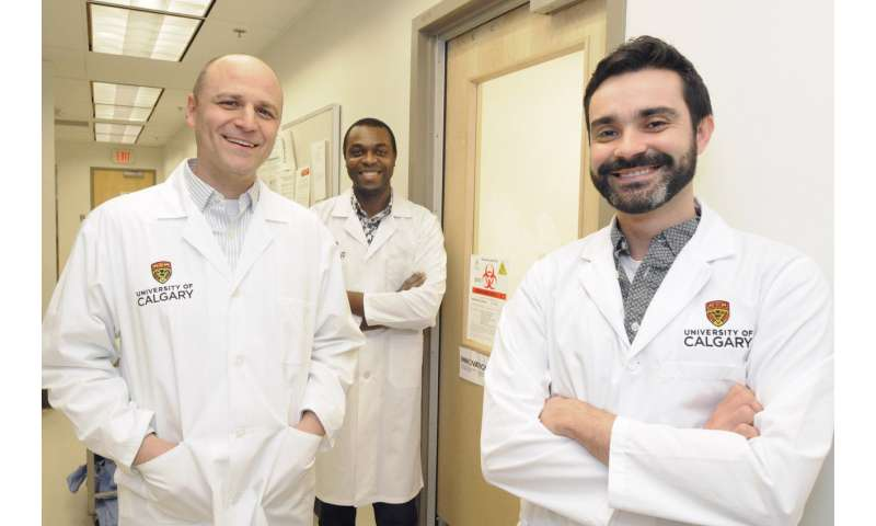 High-containment lab raises sand flies to investigate global health issue
