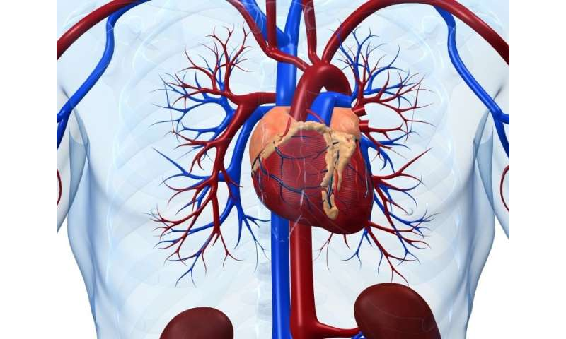 High-risk plaque on coronary CTA linked to future MACE