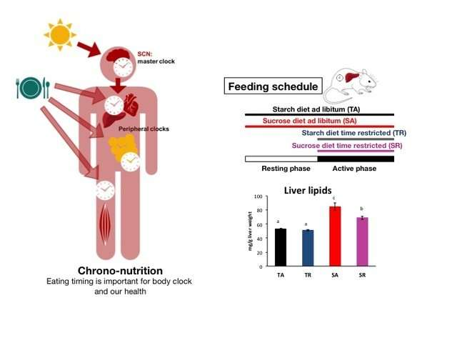 High-sugar feeding only at active times of day reduces adverse effects in rats