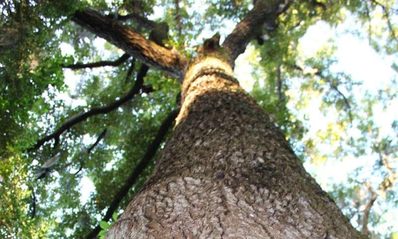 Hollow trees host massive moth slumber parties