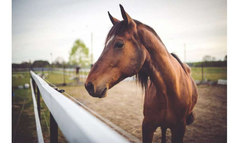 Equine Flu: New Live Vaccine Protects Against Equine Influenza