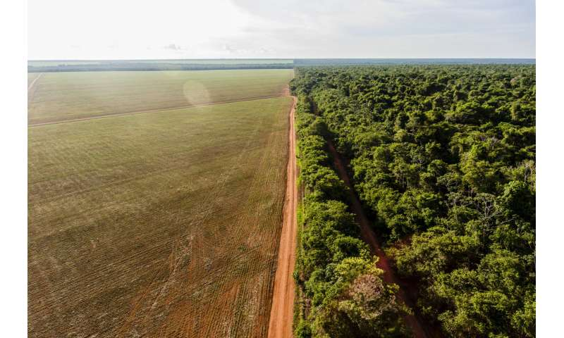 How Brazil can beat the odds and restore a huge swathe of the Amazon