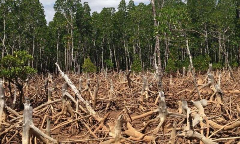 How cash can promote tropical forest conservation
