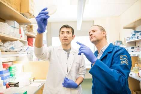 How CRISPR tools are unlocking new ways to fight disease