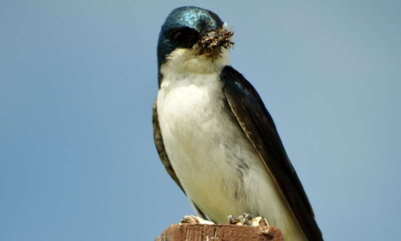 How does agriculture affect vulnerable insect-eating birds?