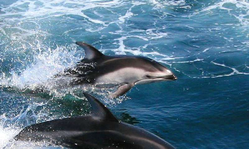 Marine mammals pictures - photo#33