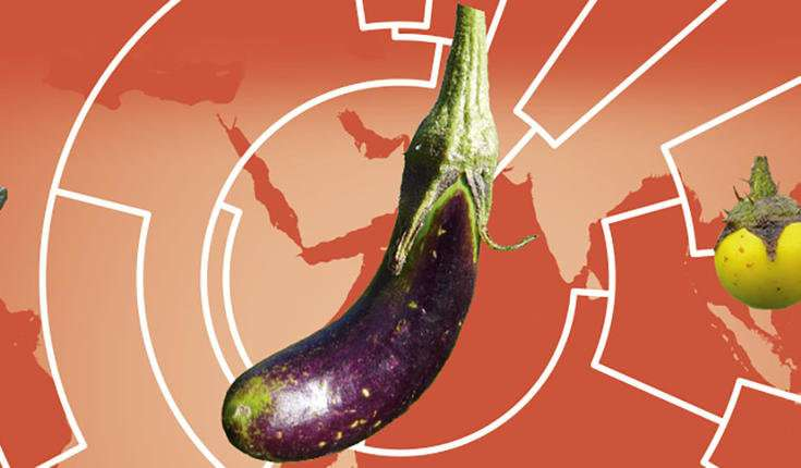 How Eggplants became Asian – genomes and elephants tell the story