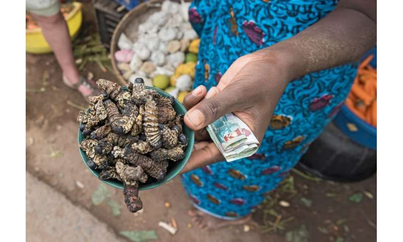 How insects can help fight hunger in the world