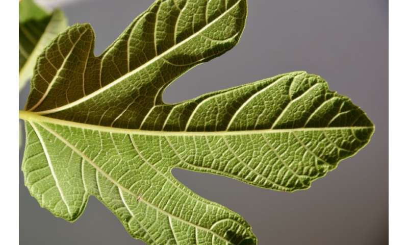 How plants work on the inside