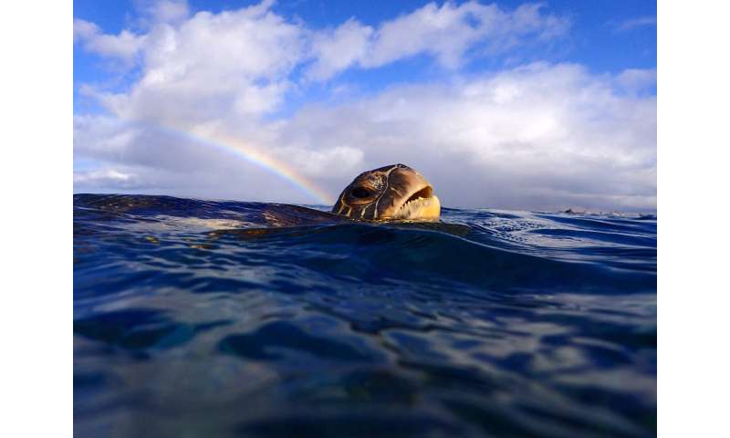 How reliable are turtles for measuring ocean trash and marine health?
