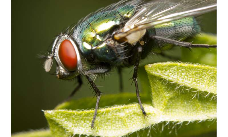 How the absence of blow flies overturned a wrongful conviction