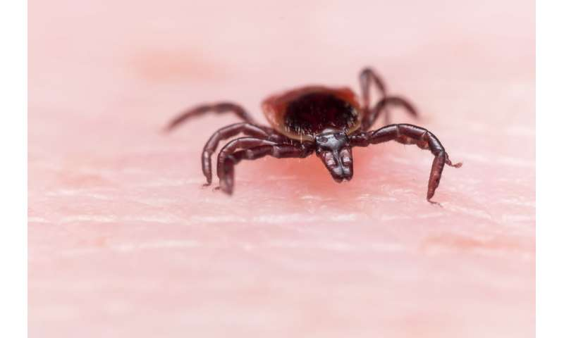 How to avoid Lyme disease while ticks are hungry in the fall