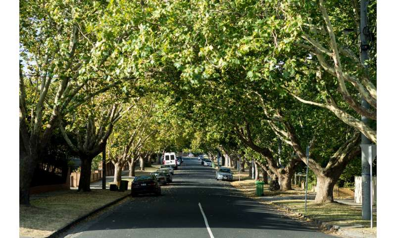 How tree bonds can help preserve the urban forest