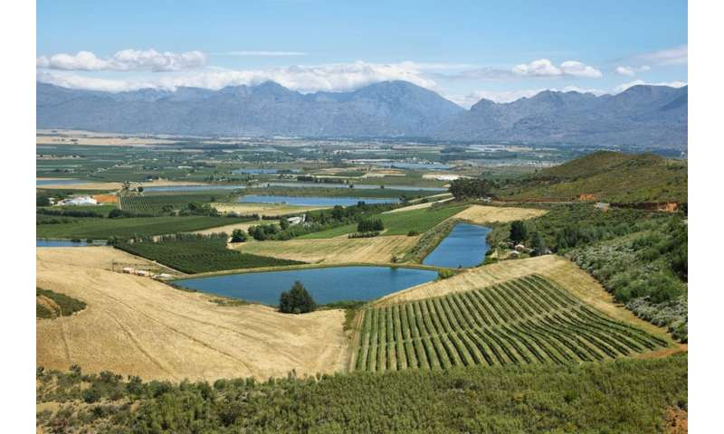 How Western Cape farmers are being hit by the drought