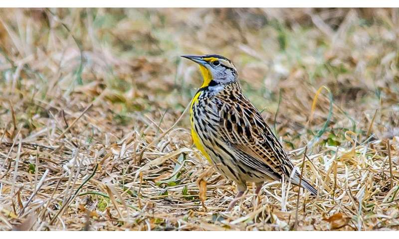 How will the winds of climate change affect migratory birds?