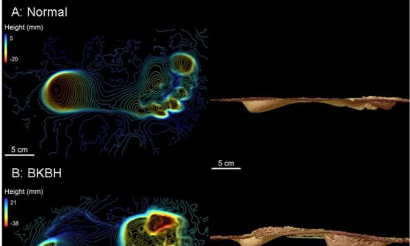 Human-like walking mechanics evolved before the genus Homo
