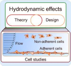 Hydrodynamics in cell studies