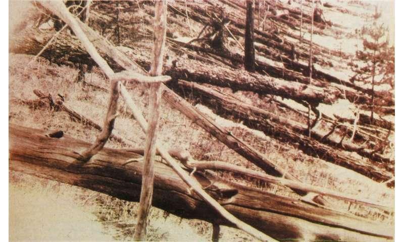 Image: Tunguska devastation
