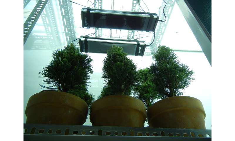 Increased UV from ozone depletion sterilizes trees