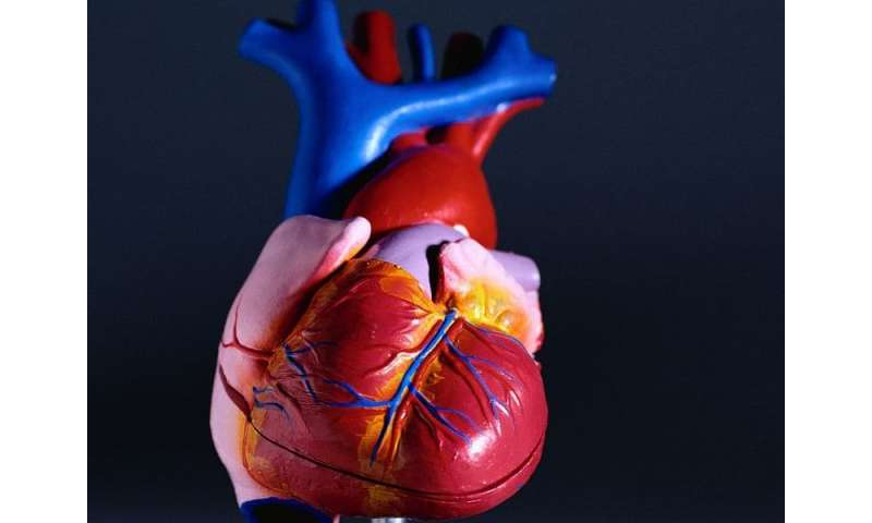 Increase observed in hearts from drug-intoxicated donors