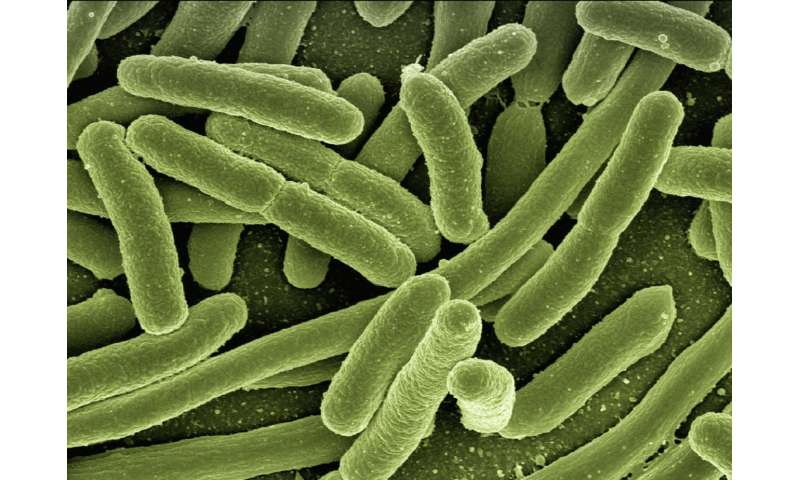Could better tests help reverse the rise of drug-resistant infections?
