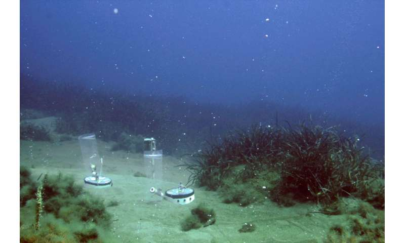 In­flu­ence of car­bon di­ox­ide leak­age on the seabed