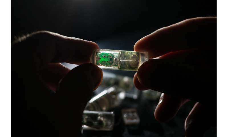 Ingestible 'bacteria on a chip' could help diagnose disease