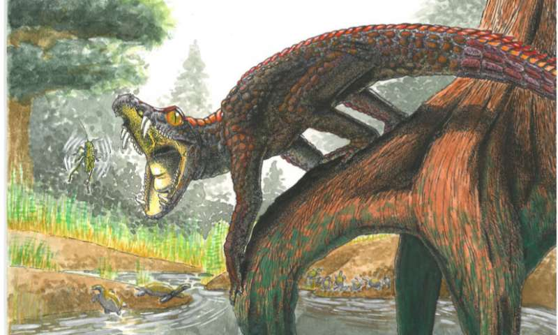 In the gaping mouth of ancient crocodiles