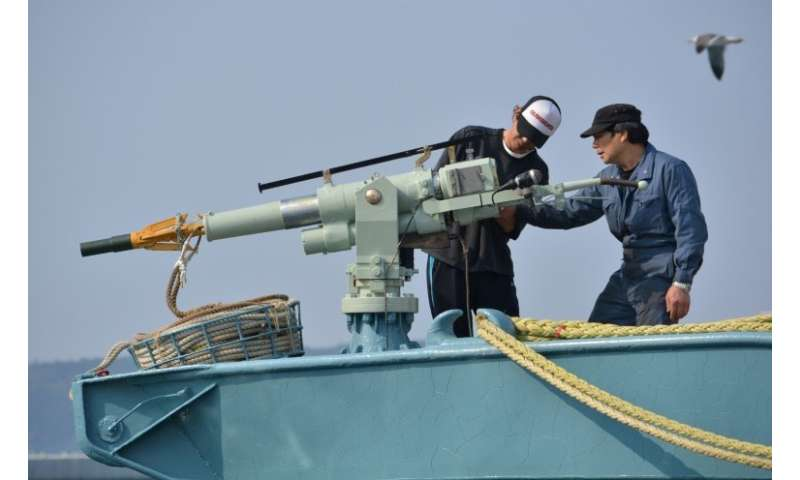 In this file photo taken on April 25, 2014 crew members of a whaling ship check a whaling gun or harpoon before departure at Ayu