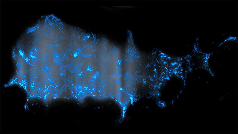 In zebrafish, the cholera bacterium sets off a surprising flush