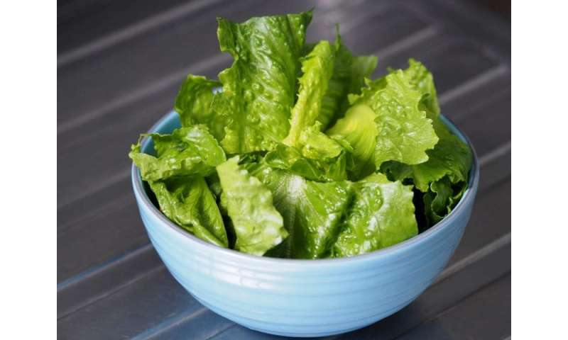 It's safe to eat romaine lettuce again, but check labels: FDA