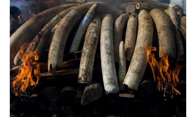 Ivory and animal horns were among hundreds of kilos of confiscated wildlife parts torched in Myanmar