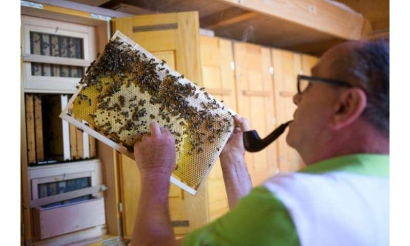 "Karl Vogrincic has more than 40 years of beekeeping under his belt and says it's ""a matter of love rather than anything els"
