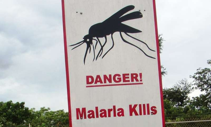 Kidney dysfunction contributes to severe malaria