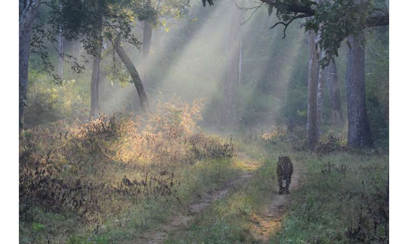 Landmark paper finds light at end of the tunnel for world's wildlife and wild places