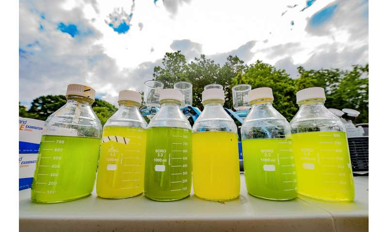 Large outdoor study shows biodiversity improves stability of algal biofuel systems