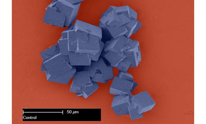 Large surface area lends superpowers to ultra-porous materials