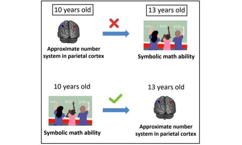 Learning arithmetic refines the primal brain system for representing quantity