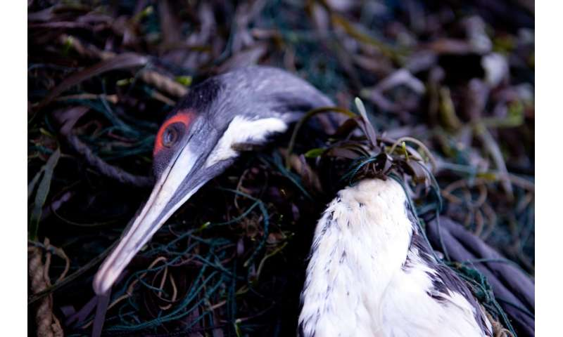 LED lights reduce seabird death toll from fishing by 85 percent, research shows